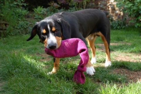 Animali Di Plastica Da Giardino.5 Giochi Fai Da Te Per Il Tuo Cane Pawshake Blog