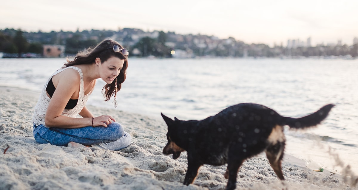 Pet Sitting and Dog Boarding with Trusted Sitters   Pawshake