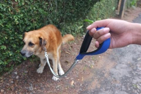 Was Du über Hundekot Wissen Solltest Pawshake Blog