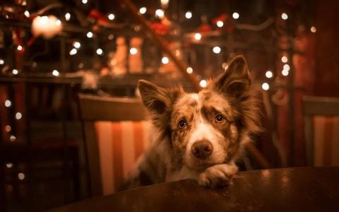Open Kast Manchester : Hundesitter katzensitter und tiersitter pawshake