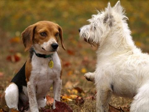 Hunde aneinander gewöhnen: so klappt es! - Tractive Blog
