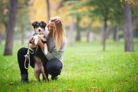 Image result for pet sitters