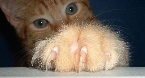 pourquoi est-ce que mon chat « fait ses griffes »? (et ce que vous
