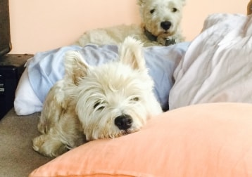 Bella & Charlie