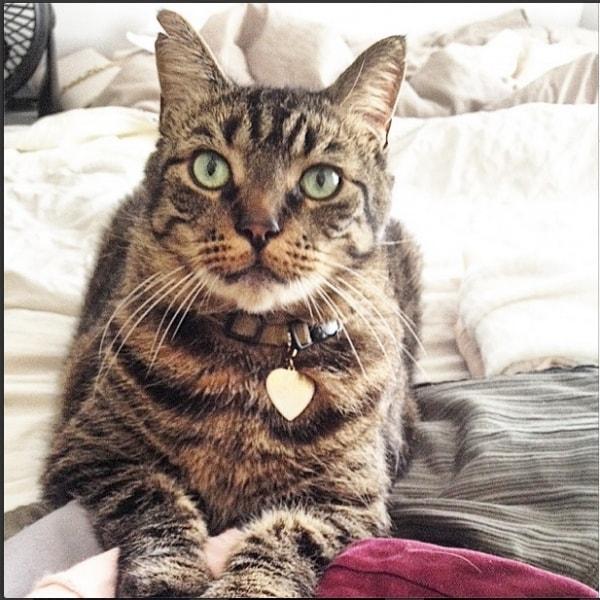 Jerry Cat Of Pet Parent Katie Pawshake