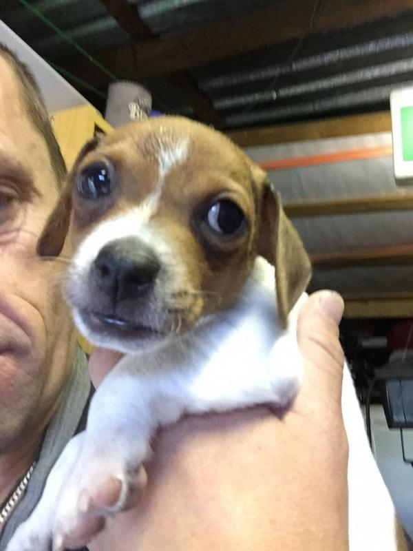 Dog Day Care Jobs Brisbane