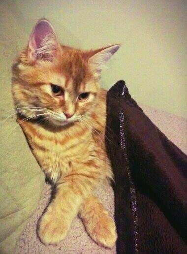venus cat abby pawshake