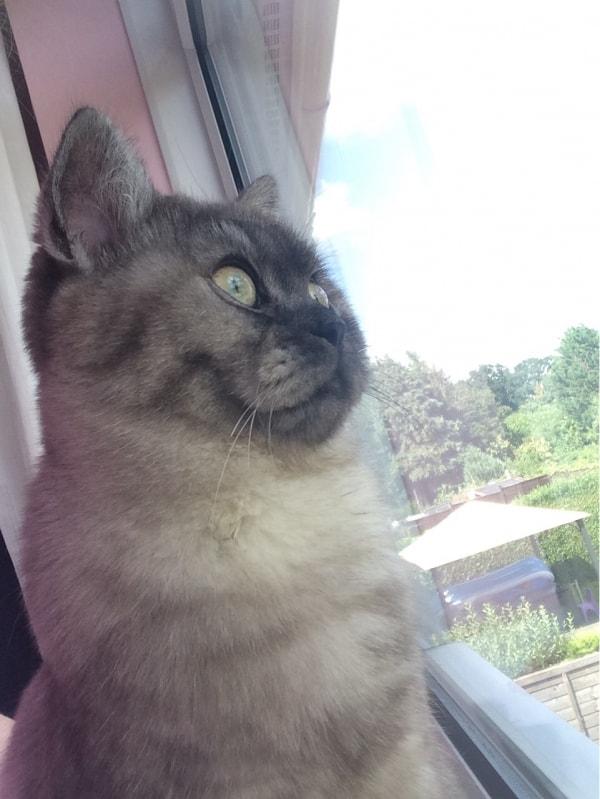kissa tampere hämeenlinna