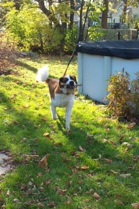 Jocelyne in Greenfield park back image