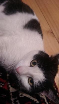 Nina in Frankston back image