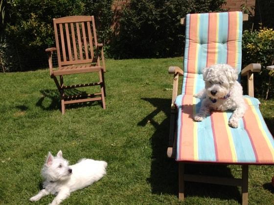 Sonya in Brighton back image