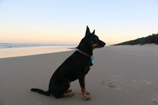Hazel in Brisbane back image
