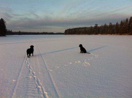 Marjo - Helsinki back image