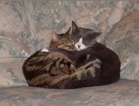 「cat sitting」の画像検索結果