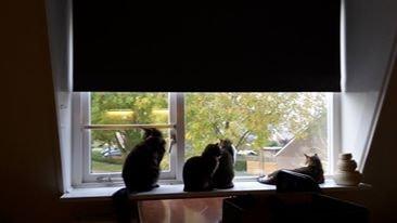 Elia&Giorgia in Weesp back image