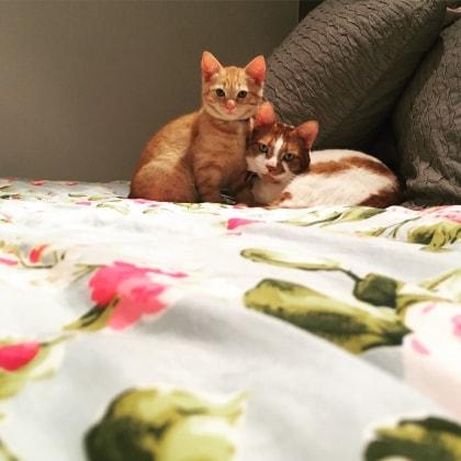 Marden Cats in Tonbridge back image