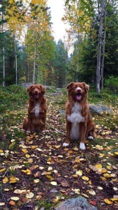 Hanna - Oulu back image