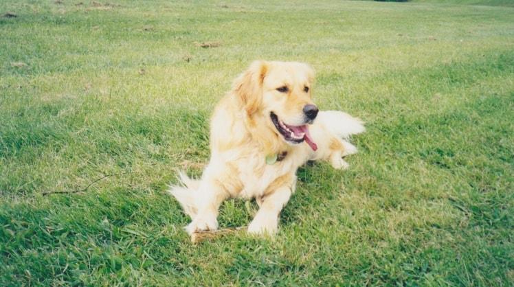 Sue in Redlands back image