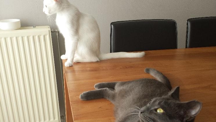 Evelyne in Gent back image