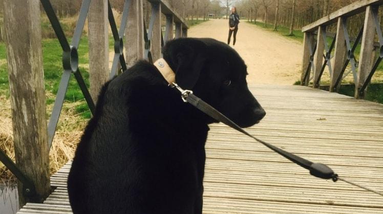 Sophie in Heerenveen back image