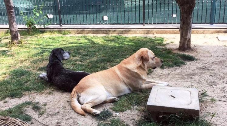Emy&Aly a Misano adriatico back image