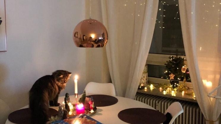 Julita i Kongenslyngby back image