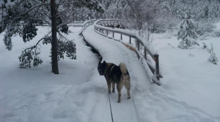 Jenni - Tampere back image