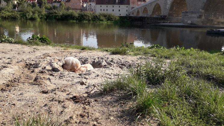 Lisa in Regensburg back image
