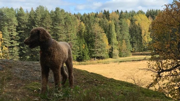 Eyrun i Oslo back image