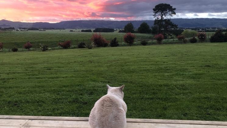 Devon in Palmerston north back image