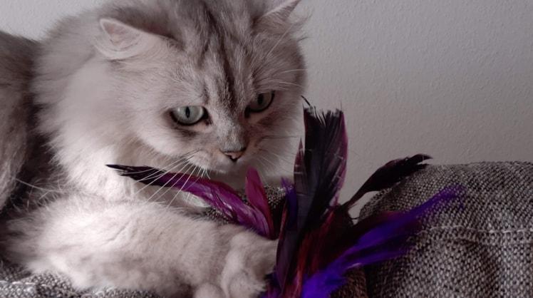 Elisa in Etagnières back image