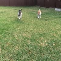 Rocket, Molly