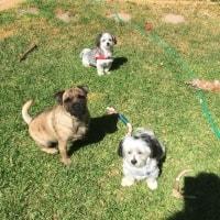 Baxter, Ralph , Louis