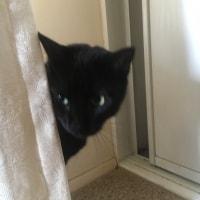 Kitty And Salem