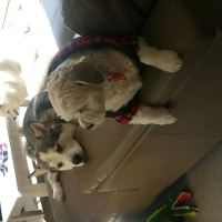 Wolfie , Tenzing