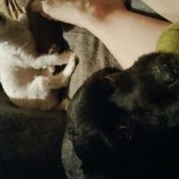 Oreo, Fluffy