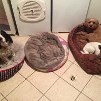 Baxter, Daphne, Boo